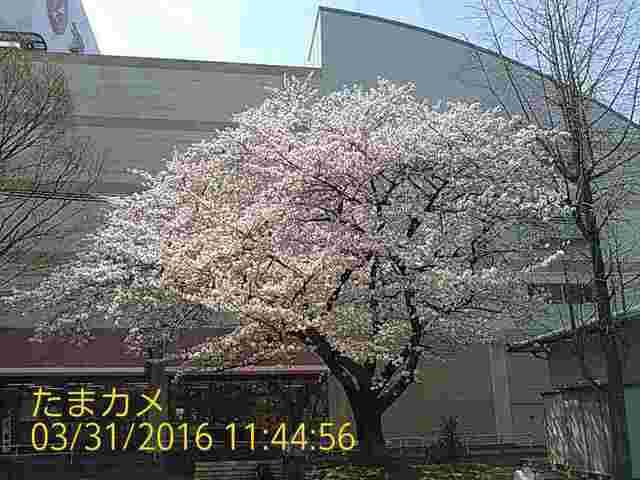 s2016-03-31-11-44-56.jpg